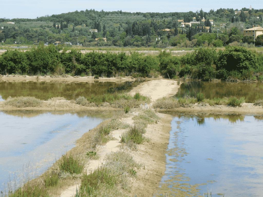 Saltern near Dobrava, to the west from Koper Bay,  Northwest (Gray) Istria (Locality of field sample IST-67).