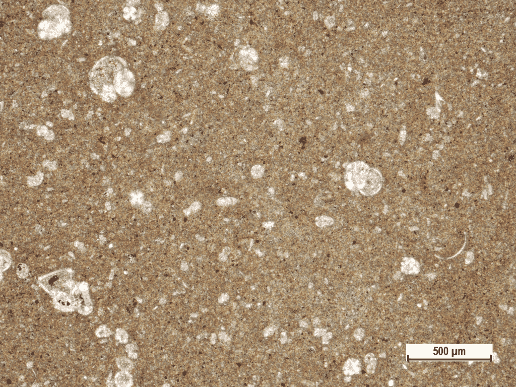 Micrite rich clayey flysch rock sample with microfossils (coarser spheric fragments) near Škropeti, Central (Gray) Istria (Polarizing microscopic image, field sample IST-31, XPL).