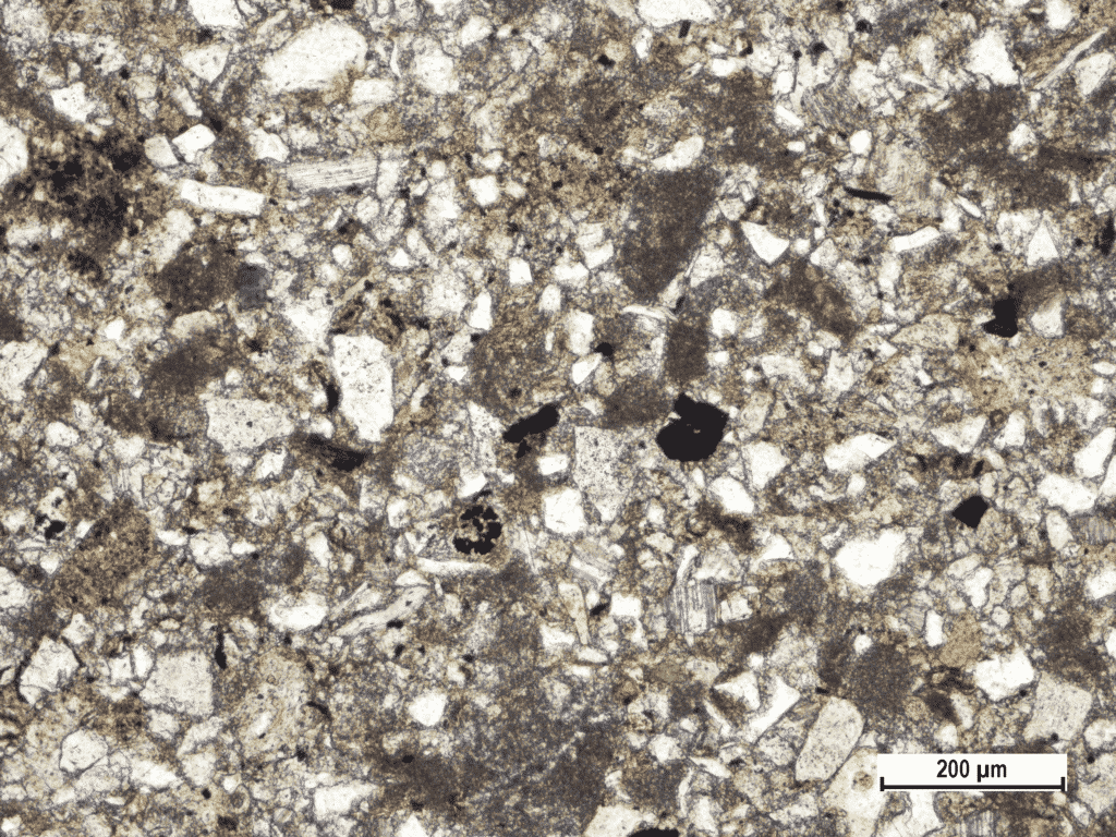 Sandy flysch rock sample mostly with siliciclastic and calcareous grains from Gologorica valley, North of Zajci, Central (Gray) Istria Istria (Polarizing microscopic image, field sample IST-5, PPL).
