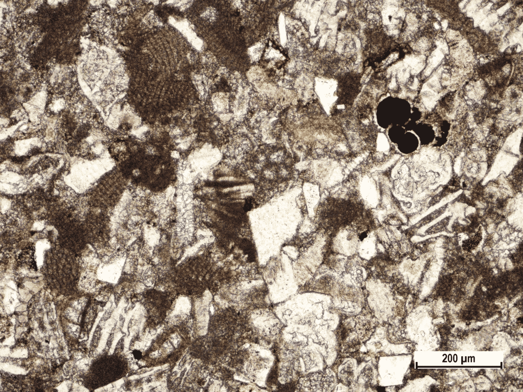 Opaque mineral (black) filled thin shelled globigerinoida (in upper right corner) in calcareous sandstone flysch sample from Kotli, Central (Gray) Istria (Polarizing microscopic image, field sample IST-49, PPL).