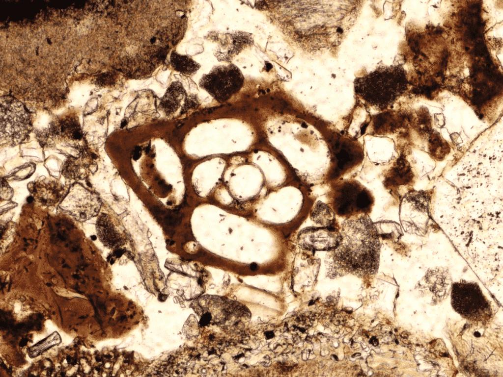 Empty shelled foraminifera in recent shallow marine bay sandy sediment from Fažana (Polarizing microscopic image, field sample IST-16, PPL).