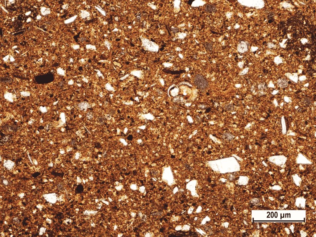General fabric of Fažana amphorae (Polarizing microscopic image, amphora sample Fažana-11, PPL).