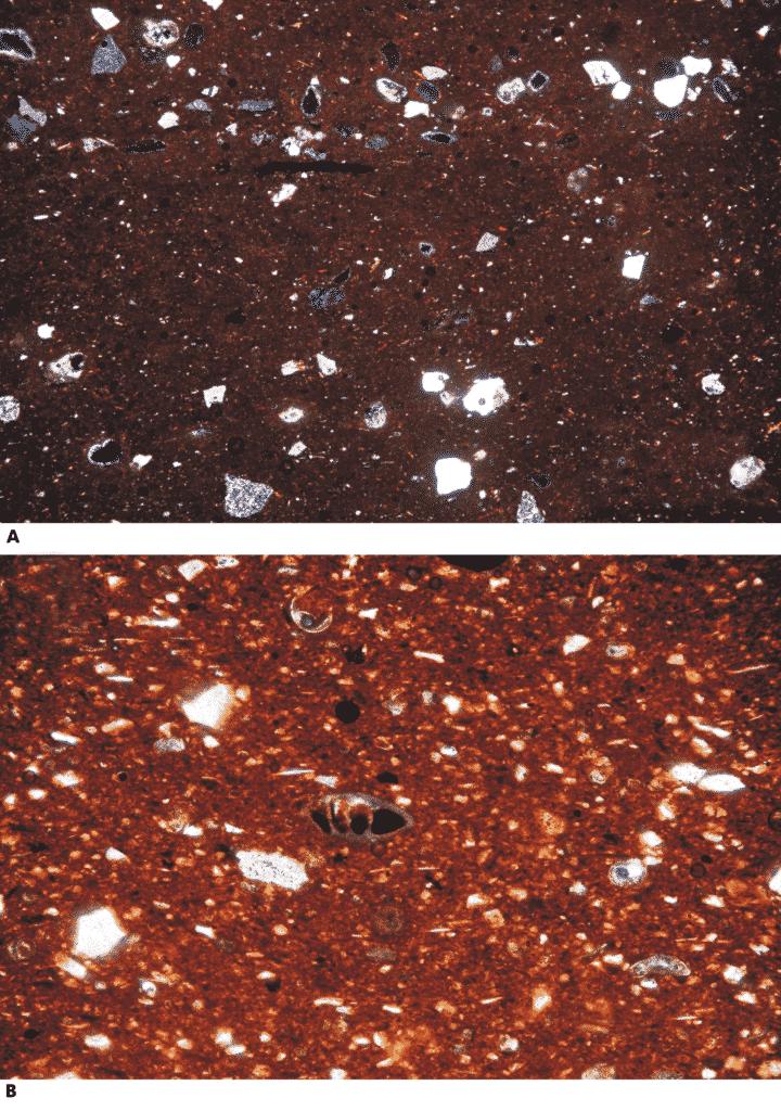 Immagini in microscopia ottica a luce polarizzata trasmessa a nicol incrociati di due campioni rappresentativi dei fabric 1 (a) e 2 (b).