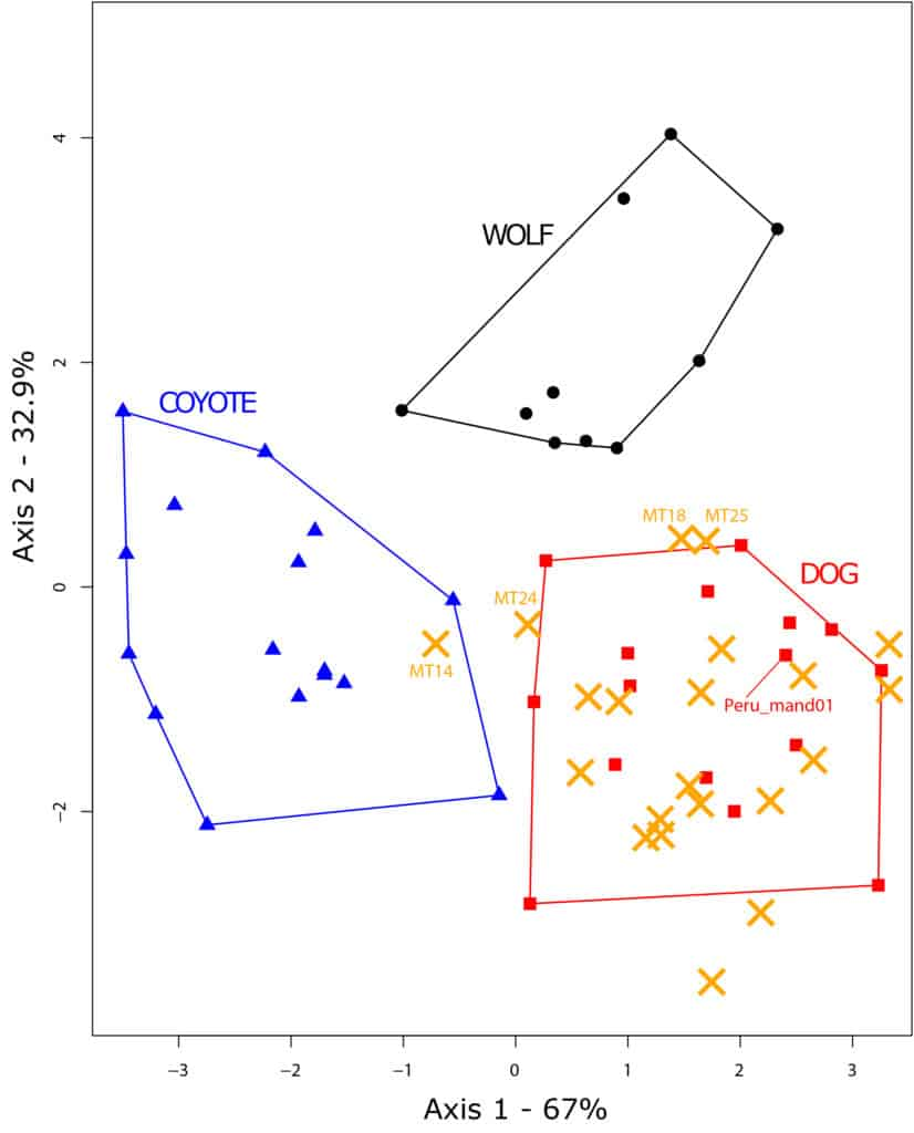 Linear discriminant analysis on shape. The position of the archaeological specimens was calculated using a predictive linear discriminant analysis.